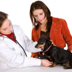 5 Common Dog Health Problems All Dog Parents Should Know