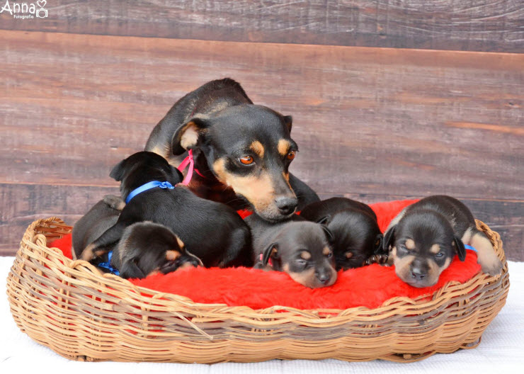 5 puppies with the mother