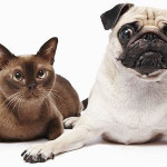 Obesity In Dogs And Cats